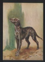 Deerhound   tobacco cigarette card postcard dogs 1930's #060